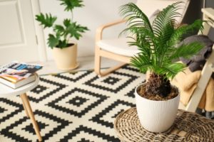 Using Sustainable Materials to Decorate Your Home
