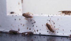 3 Things You Should Do if You Have an Infestation